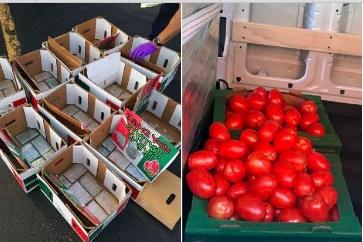Descubren tráfico millonario de heroína escondida entre tomates de Chicago aNY